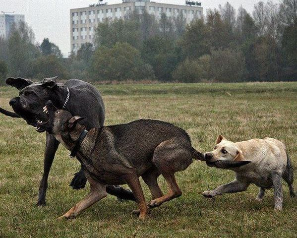epic_dog_fight